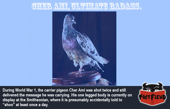 The Hero Pigeon Who Took Two Bullets and Lived - Fact Fiend