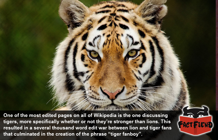 tiger and lion images  Tiger and Lion Fans Are Just the Worst - Fact Fiend